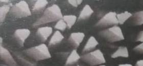 trilobe